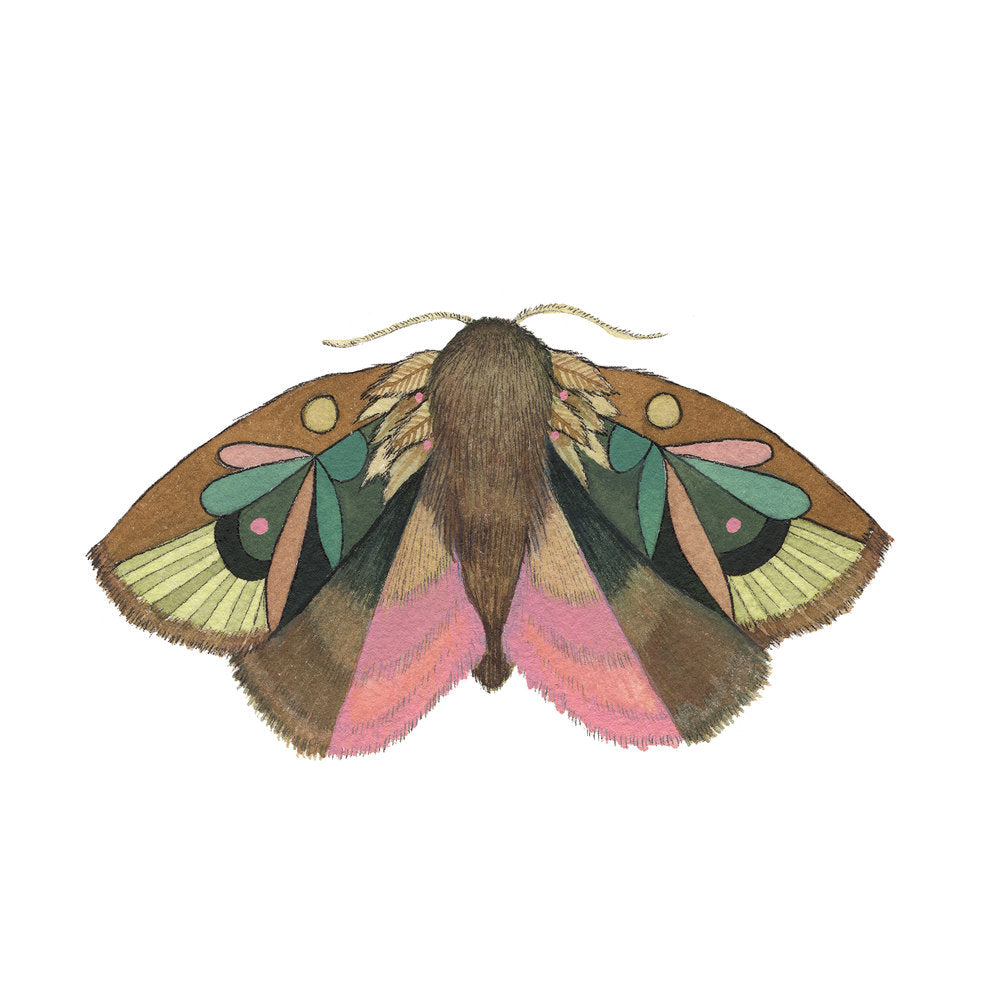 Collector: Moth 4 - 5x7 Print