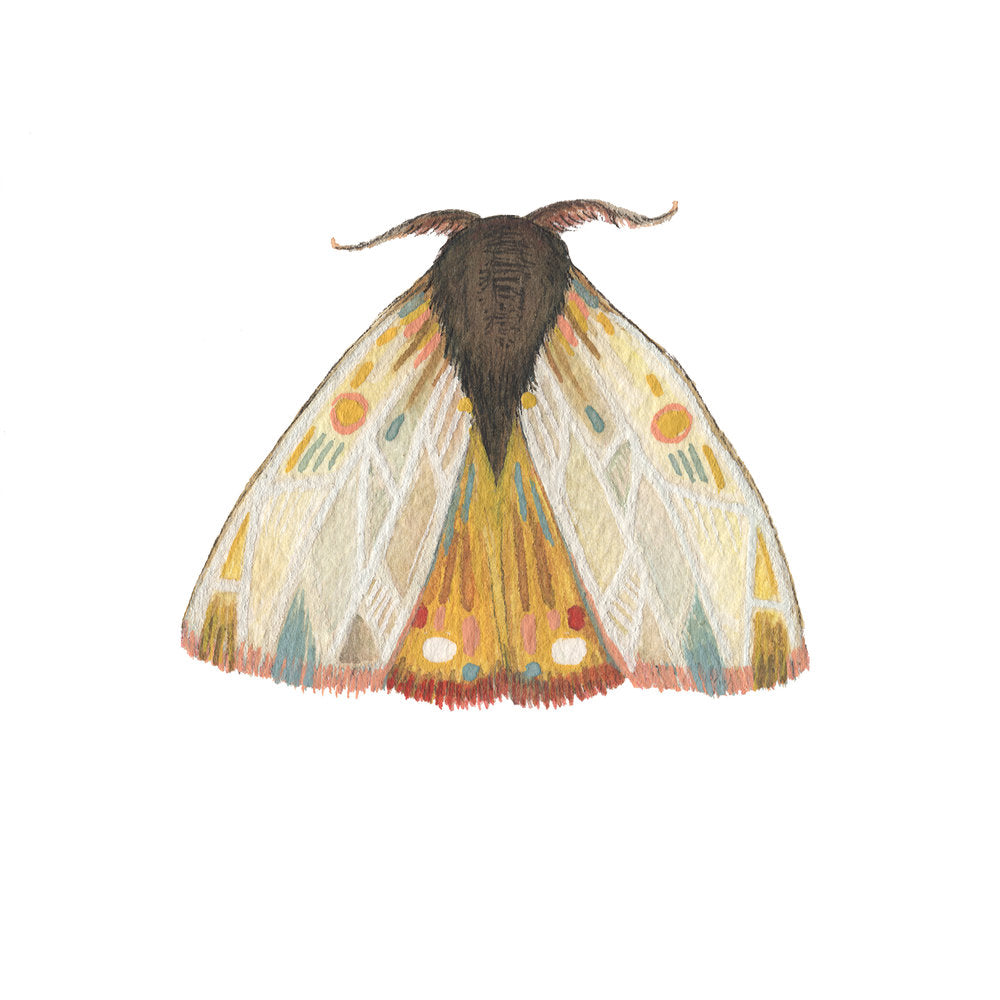 Collector: Moth 9 - 5x7 Print