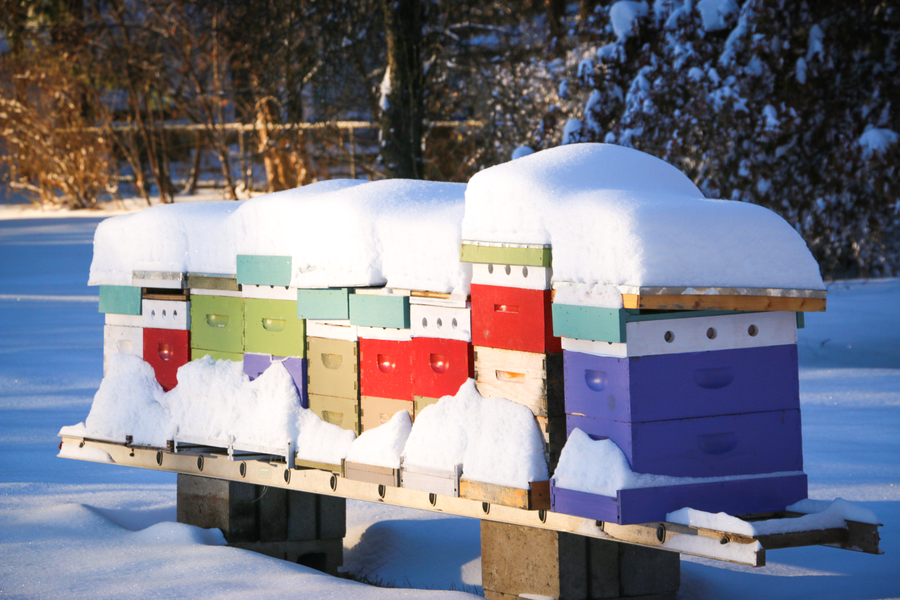 Mid Course Corrections:  Helping your bees survive these harsh Michigan winters.