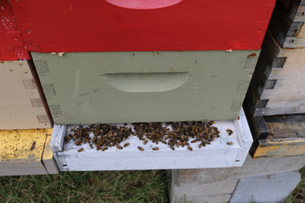 Dead bees in November!  Have I lost my colony???