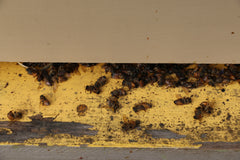 A handful of dead bees on the doorstep isn't the end of the world.