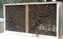 Three pound package bees. (Arrival: April 2021)