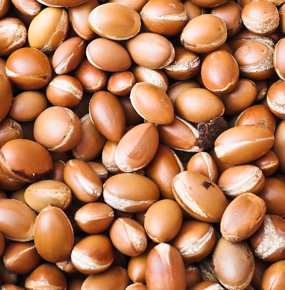 Moroccan argan seeds