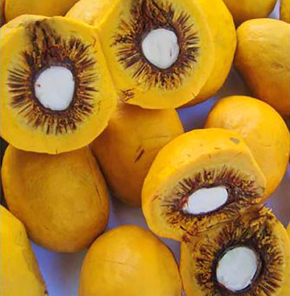 Pequi fruit