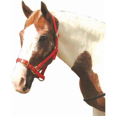 Roma Adjustable Headcollar