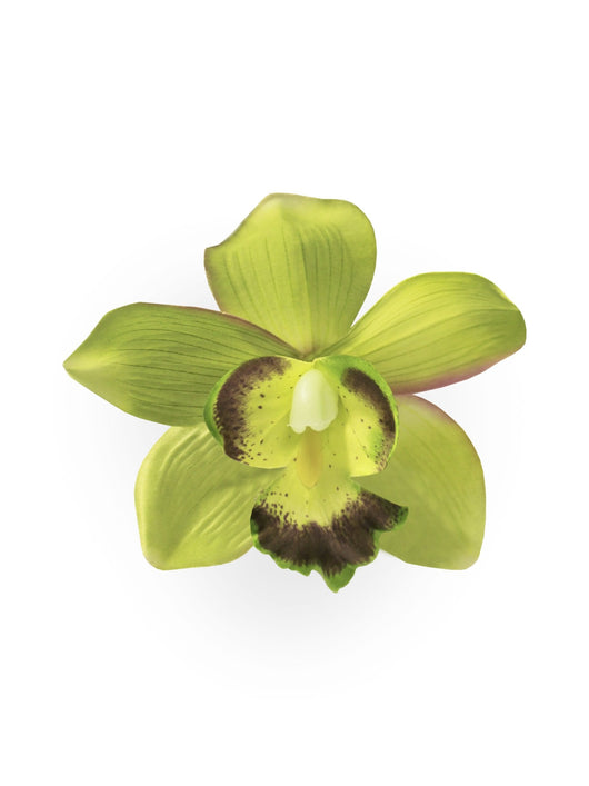 Collectif Orchid Hair Clip in Green