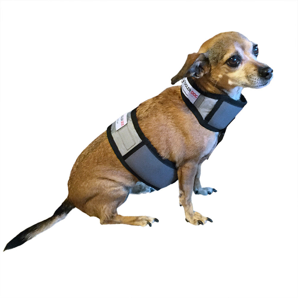 Cooling Vest and Cooling Collar (Extra Small Dogs)