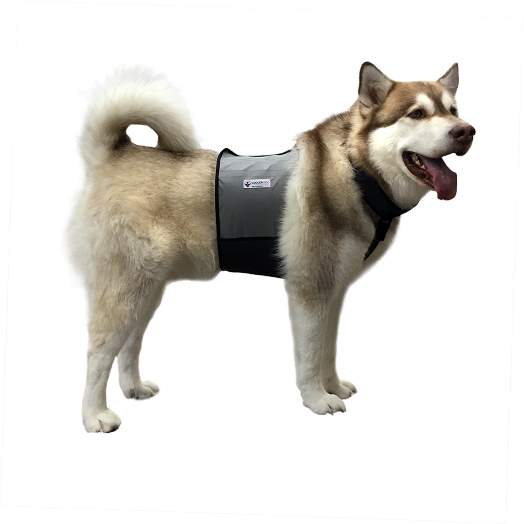Cooling Vest and Cooling Collar (Large Dogs)