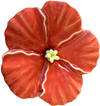 Orange Hibiscus Flower, Large