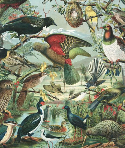 Native Birds of NZ Large Wall Chart