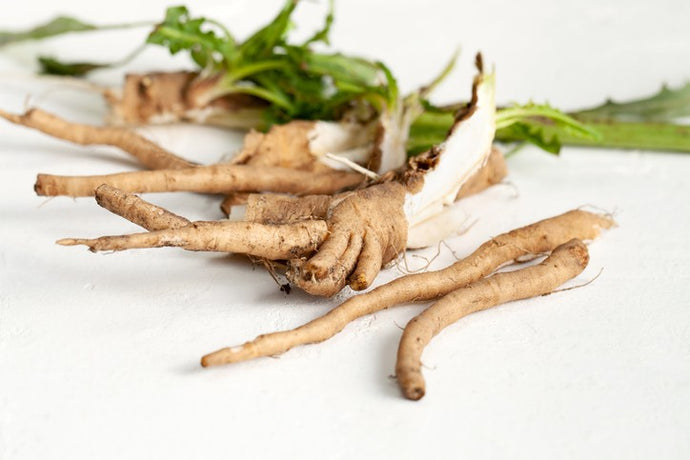 The Benefits of Chicory Root and Prebiotics