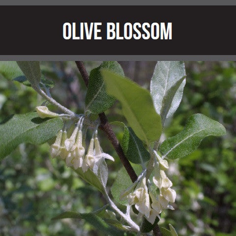 Olive Blossom