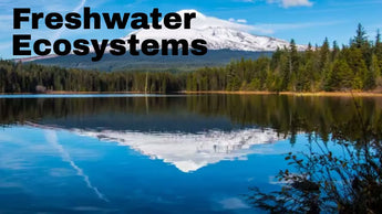 Is Freshwater Safe To Drink Without Purification?