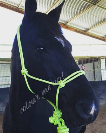 Rope Halter and 6ft Lead Set