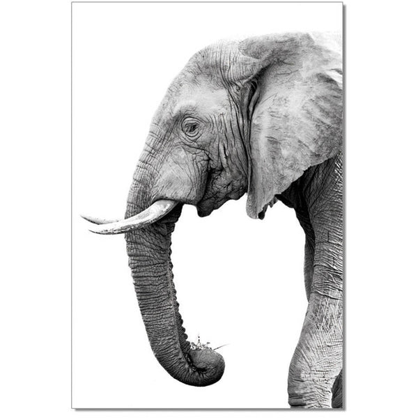 Black and White Elephant Print