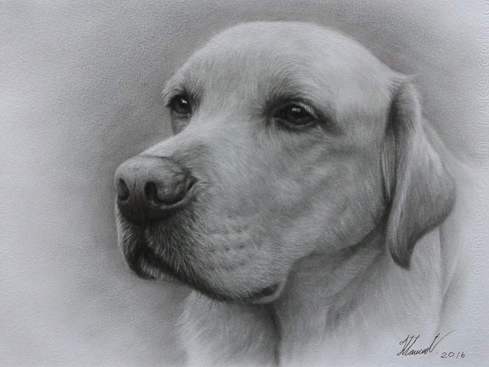 Do you ever practice pet portraits on your own dogs?