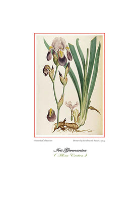 Ferdinand Bauer: Iris Germanica-Ariston Books