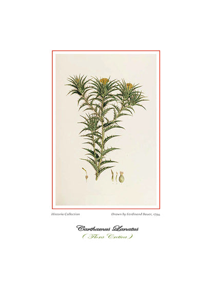 Ferdinand Bauer: Carthamus Lanatus-Ariston Books