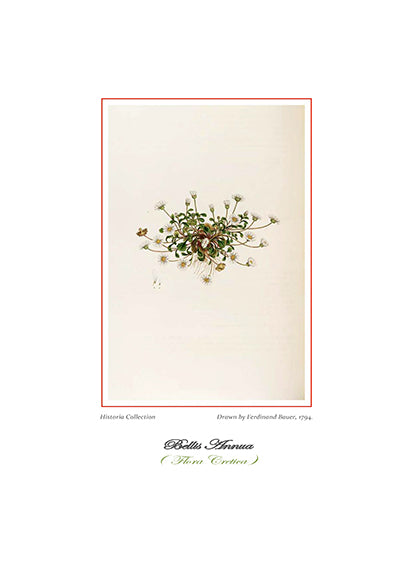Ferdinand Bauer: Bellis Annua-Ariston Books