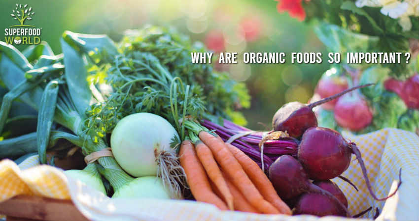 Why Are Organic Foods So Important?