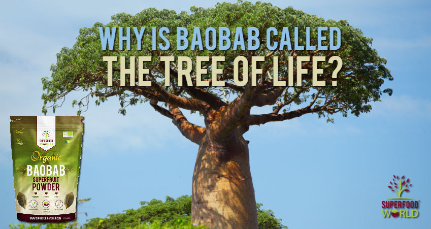 Why is Baobab Called the Tree of Life?