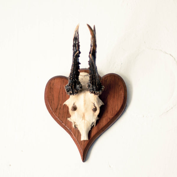 Oddhaus Vintage Decoration Luxembourg Vintage Taxidermy wall mounted skull