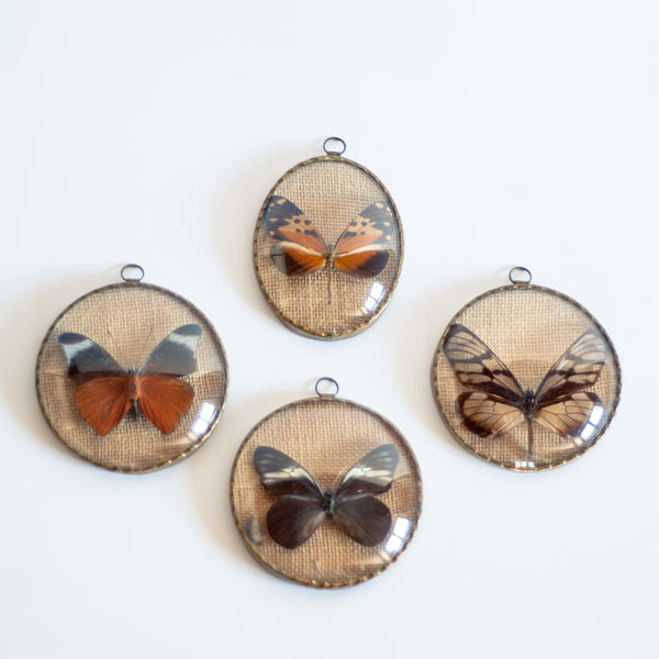 § Set of 4 Vintage Naturalized Butterfly Taxidermy Frames