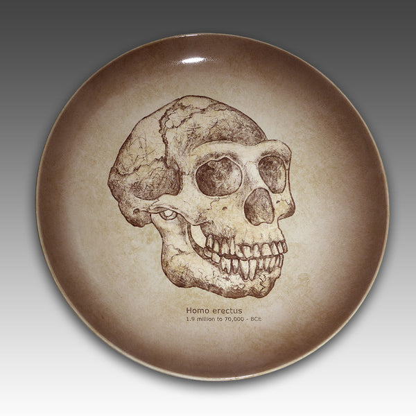 Homo erectus skull painted on a ceramic plate