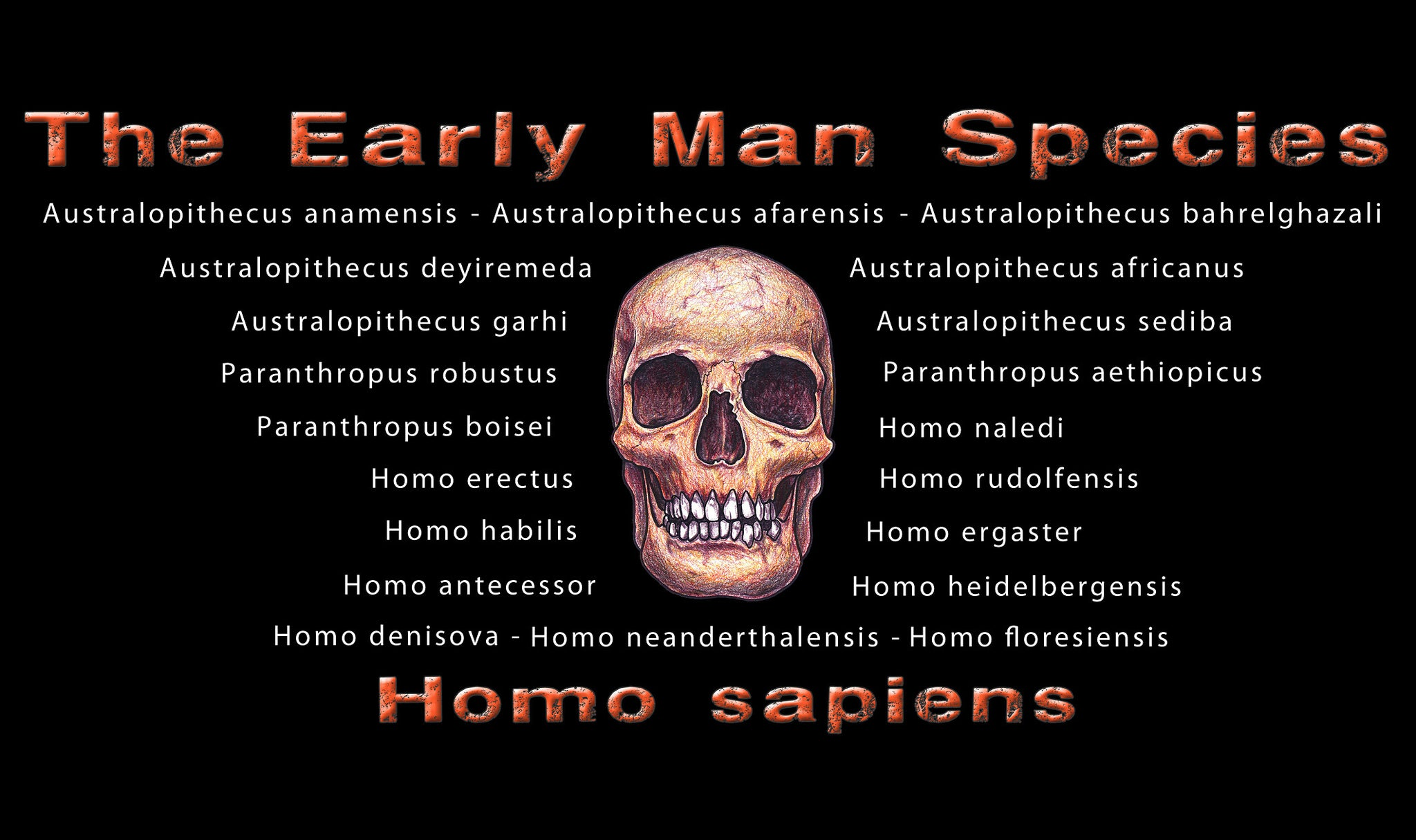 Black t-shirt listing all hominin speices