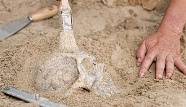 uncovering a hominin skull at a dig site
