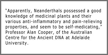 neanderthals used herbal plants for medicine