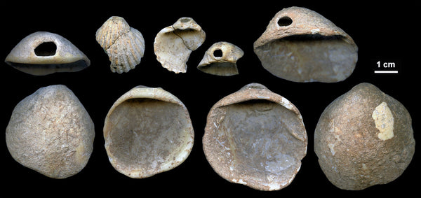 120,000 painted and pierced shells created by Neanderthals