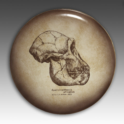 Australopithecus skull hand painted with glazes on a ceramic plate and fired to 2,000 degrees. The skull is an accurate to scale depiction.