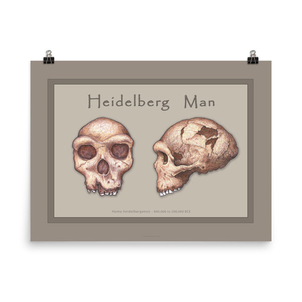 The Human Evolution series Heidelberg Man Poster