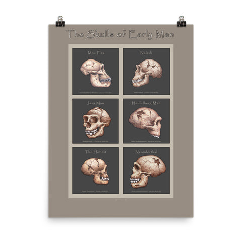 The Human Evolution series Skulls of Early Man