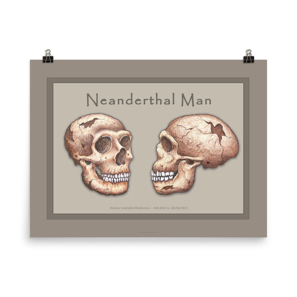 The Human Evolution series Neanderthal Man Poster