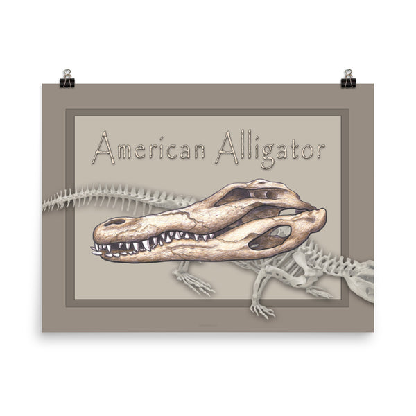 The Animal Skull series Alligator Poster One