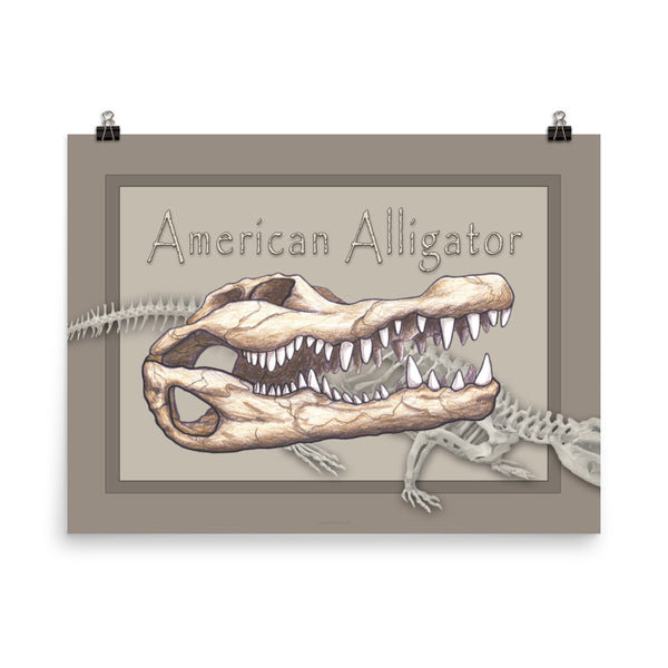 The Animal Skull series Alligator Poster Two