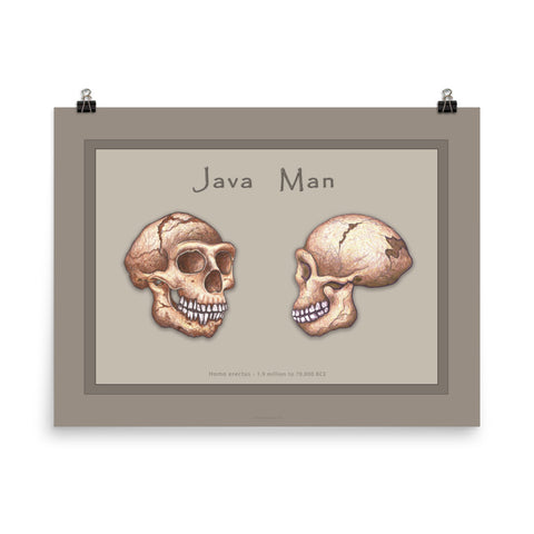 The Human Evolution series Java Man Poster
