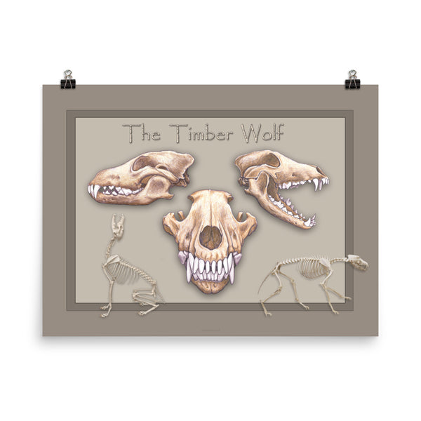 The Animal Skull series Timber Wolf Poster