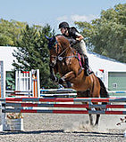 Jenny Adrion Hunt Country Saddlery