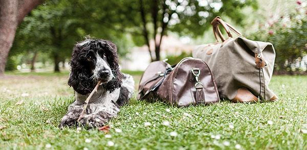 Plan the Perfect Dog-Friendly Getaway with All Four Paws