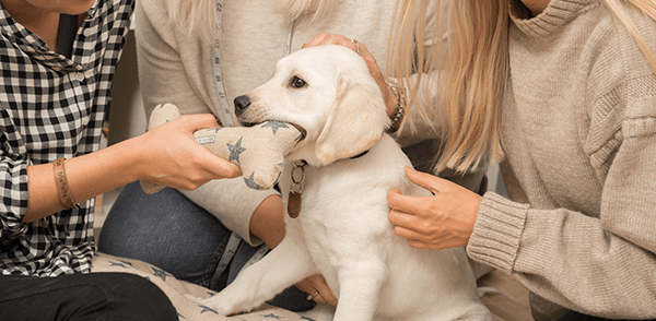 Mutts & Hounds Support Guide Dogs Week 2017