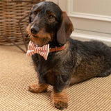 Red Ticking Stripe Dog Bow Tie