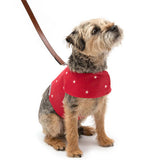 Cranberry Stars Harness