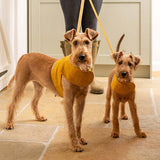 Mustard Wax Dog Harness