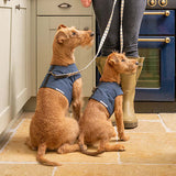 Navy Wax Dog Harness