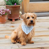 Posie Cotton & Chambray Reversible Dog Neckerchief