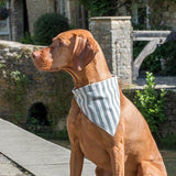 Mutts and Hounds Luxury Flint Strip Brushed Cotton Neckerchief