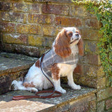 Mutts and Hounds Luxury Slate Tweed Soft Harness